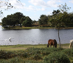 New Forest holidays