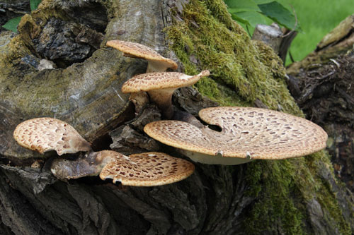 Fungi, a rural treasure